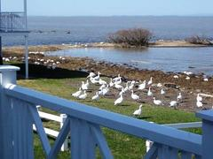location-chalet_l-oie-blanche-sur-mer-491_110030