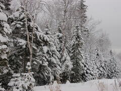 chalet-a-louer_charlevoix_69157