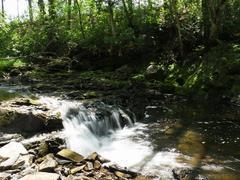 location-chalet_le-cours-du-ruisseau_63506