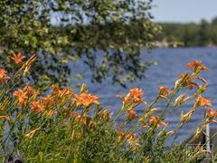 cottage-rental_le-rassembleur-du-lac-boissonneault_108495