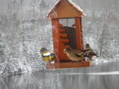 cottage-rental_chalet-l-inspiration_80955