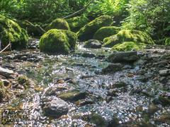 louer-chalet_Wotton_88869