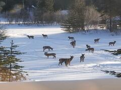 chalet-a-louer_lanaudiere_125022