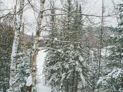 chalet-a-louer_lanaudiere_127592