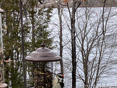 cottage-for-rent_chaudiere-appalaches_128687