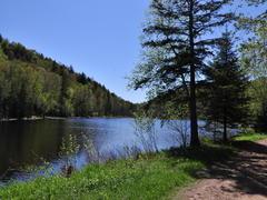 location-chalet_cabane-dans-les-arbres-le-colibri_32352
