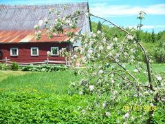 cottage-rental_l-etoile-de-la-montagne_13541